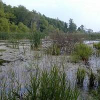 20090527-wetland-restoration
