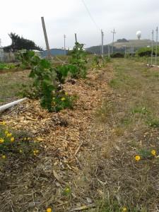 row of black berry